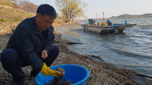 4日、京畿道高陽市の漢江河口で捕まえたヒモムシを漁師が手に取り見せている。