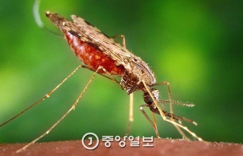 マラリアを媒介する蚊(写真=中央フォト)