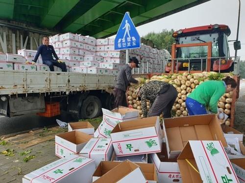 4日、江原道平昌郡大関嶺面の橋の下で農民が収穫した高冷地ダイコンを箱に詰めている。箱が雨に濡れないよう2キロほど離れた畑からダイコンをトラクターで運んだ。 パク・ジノ記者