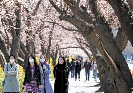 29日、桜が開き始めた輪中路をマスクをした市民が歩いている。今年は新型コロナの影響を受けて、ソウル汝矣島輪中路で桜の花見を楽しむことができない。