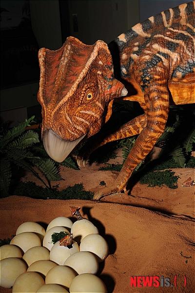 コリアケラトプスの復元模型(写真 NEWSIS)