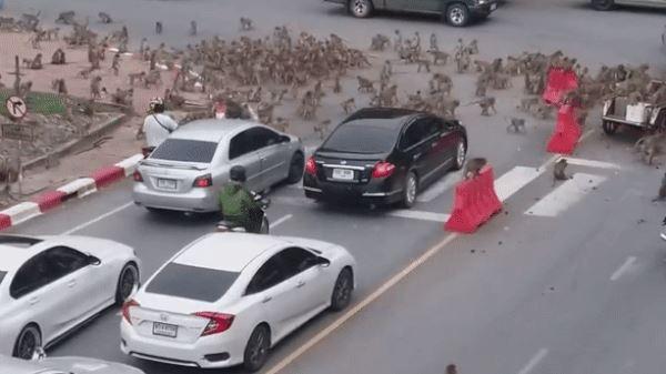 29日外信によると、4日前に「サルの都市」として有名なタイ中南部ロッブリー県の都心で数百匹のサルの群れが集団間で乱闘劇を繰り広げた。[写真 YouTube キャプチャー]